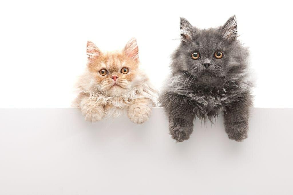 cat vet product